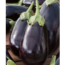 Vinete Halflange Violette, 10 g