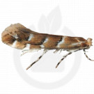 russell ipm pheromone lure cameraria ohridella 50 p - 1