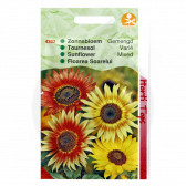 Floarea Soarelui Mix, Helianthus Evening Debilis Mix, 0.5 g