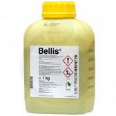 Bellis, 1 kg
