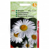 Crizanteme, Chrizantemum Mayqueen, 0.75 g