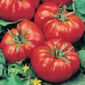 Tomate Marmande, 10 g