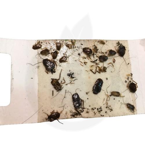 CatchMaster 288i, adeziv insecte, set 3 bucati