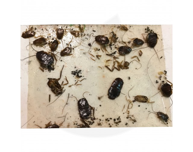 catchmaster capcana 288i adeziv insecte set 3 buc - 7