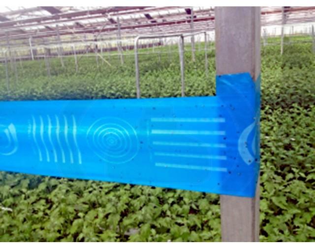 agrisense fly greenhouse sut blue glue roll 25 m 4 bucati - 1