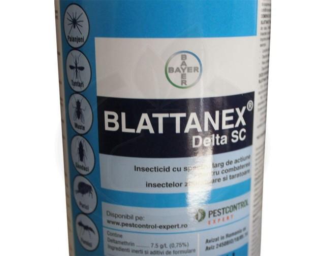 Blattanex_sc - 3