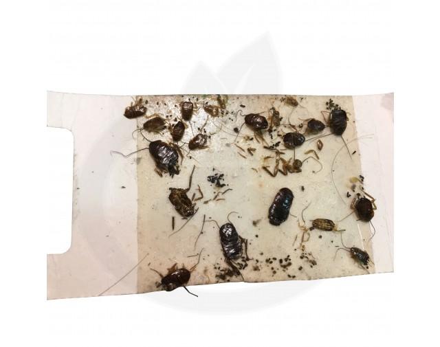catchmaster capcana 288i adeziv insecte set 3 buc - 9