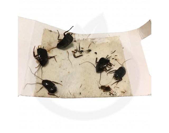 catchmaster capcana 288i adeziv insecte set 3 buc - 8