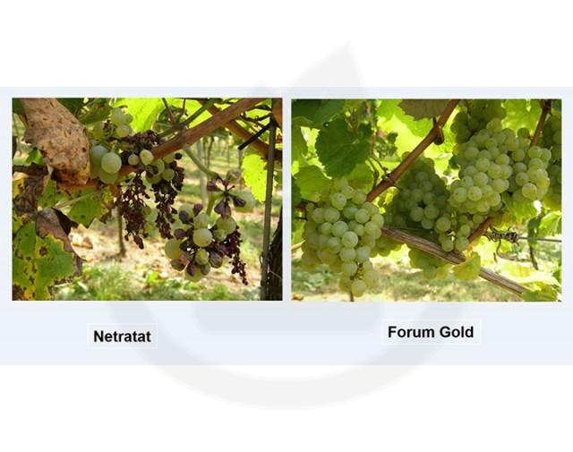 basf fungicid forum gold 1 kg - 3