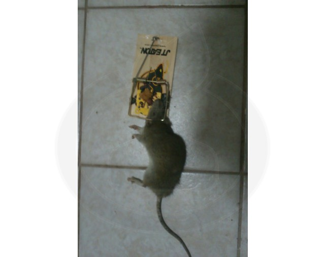jte 401 rat - 3