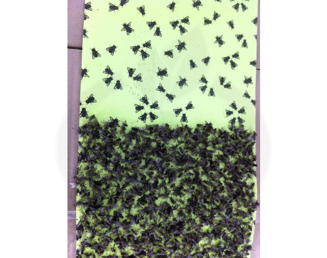 kollant capcana fly roll adeziv muste - 6